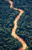 droga poprzez las